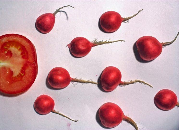 Fertilidade masculina e os tomates
