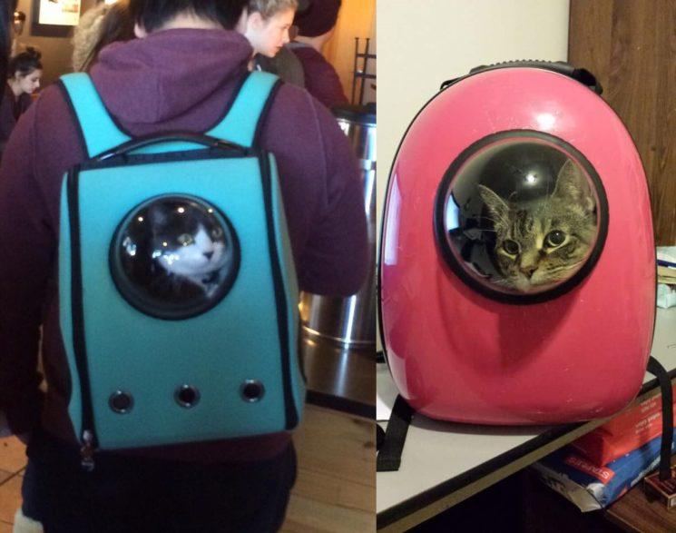 Moda de levar os gatos como se fossem astronautas